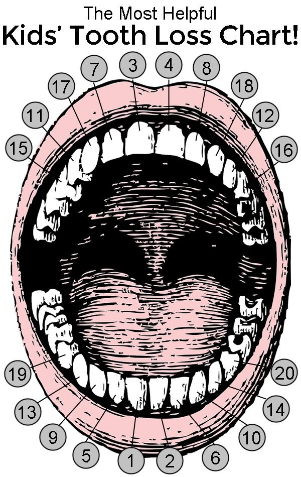 The Most Helpful Kids Tooth Loss Chart You Ll Ever See Hilarious Forget When Your Teeth Will Come Out This Is What Pas Really Need To Know