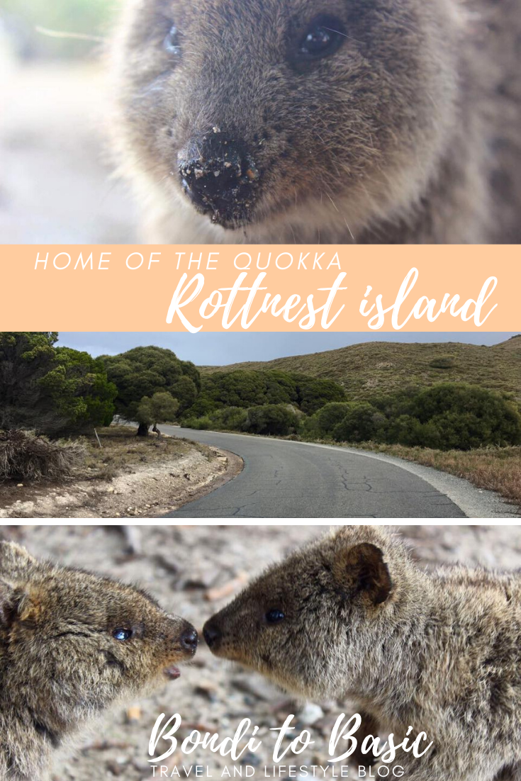 One Day On Rottnest Island Home To The Quokkas One Day Trip Happy Travels Australia Animals