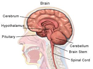 pituitary adenoma – causes, symptoms, diagnosis, treatment and, Human Body