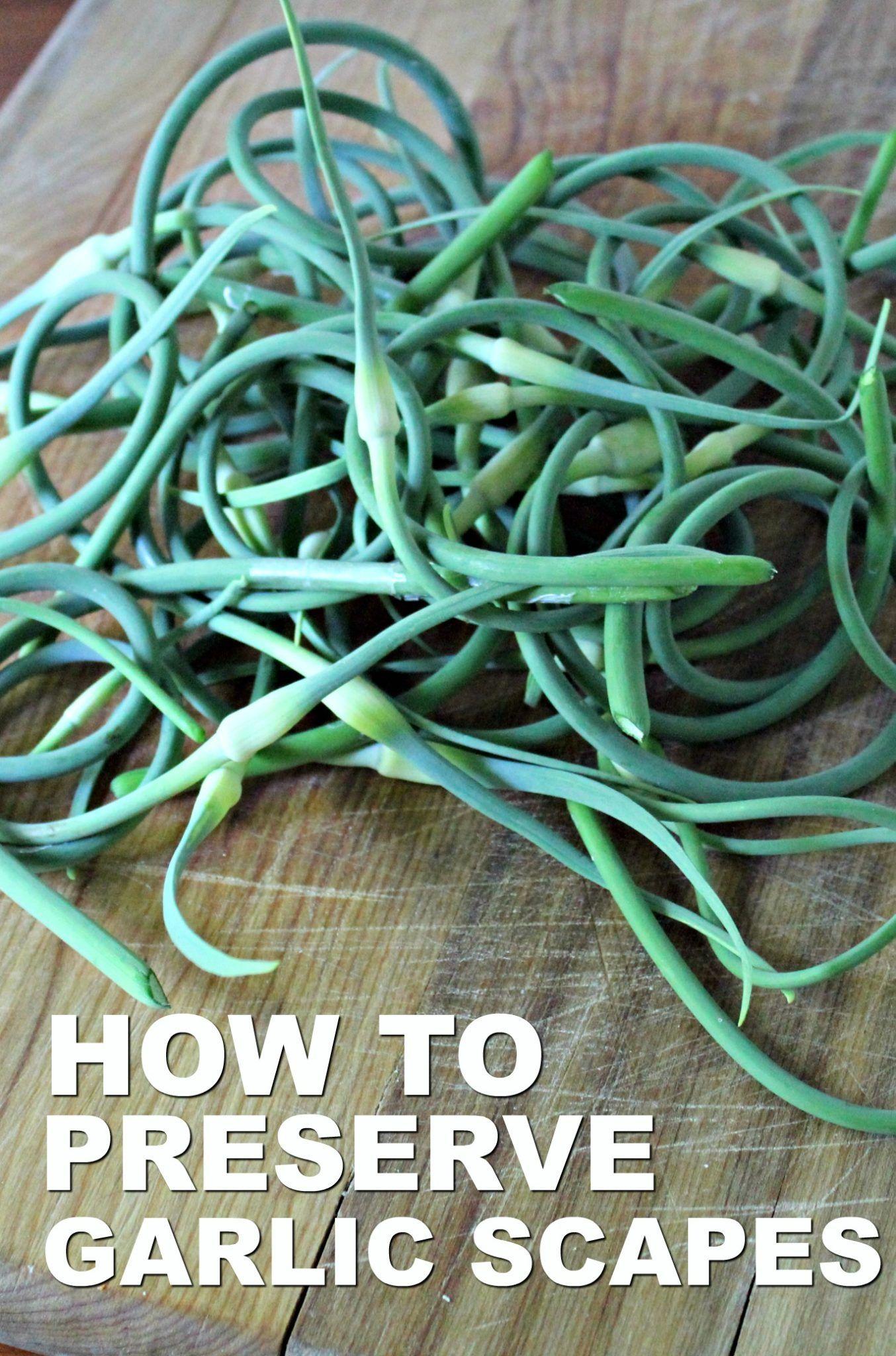 Garlic Scape Infused Olive Oil Recipe Preserving