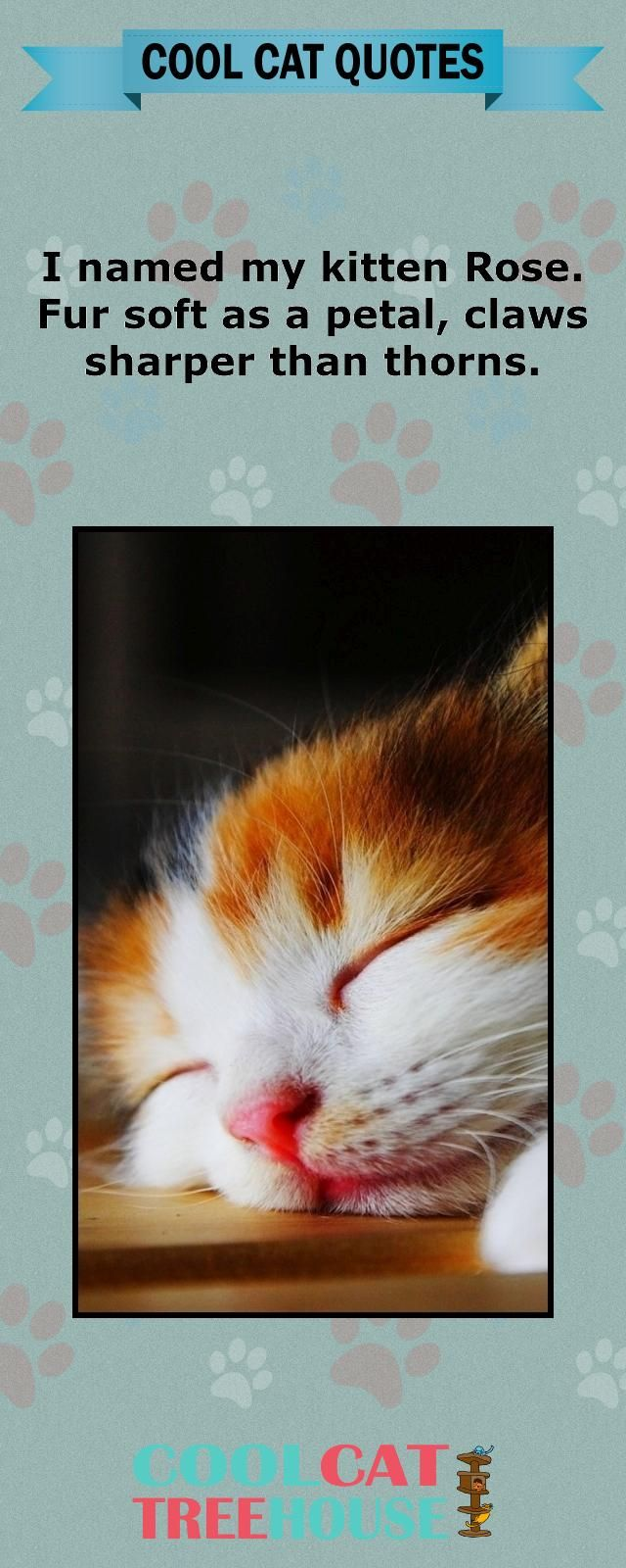 Cats are the inspiration on living a joyful life. Enjoy these words of cat wisdom. | www.coolcattreehouse.com