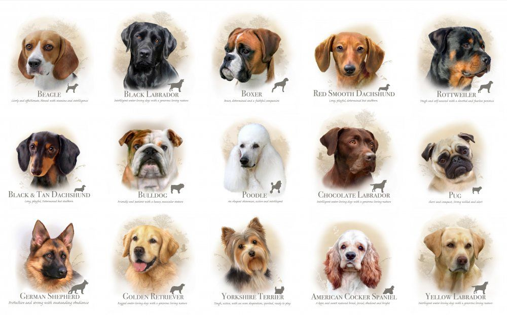 Thousands Of Dog Lovers Flocked The First Indian Dog Breeds