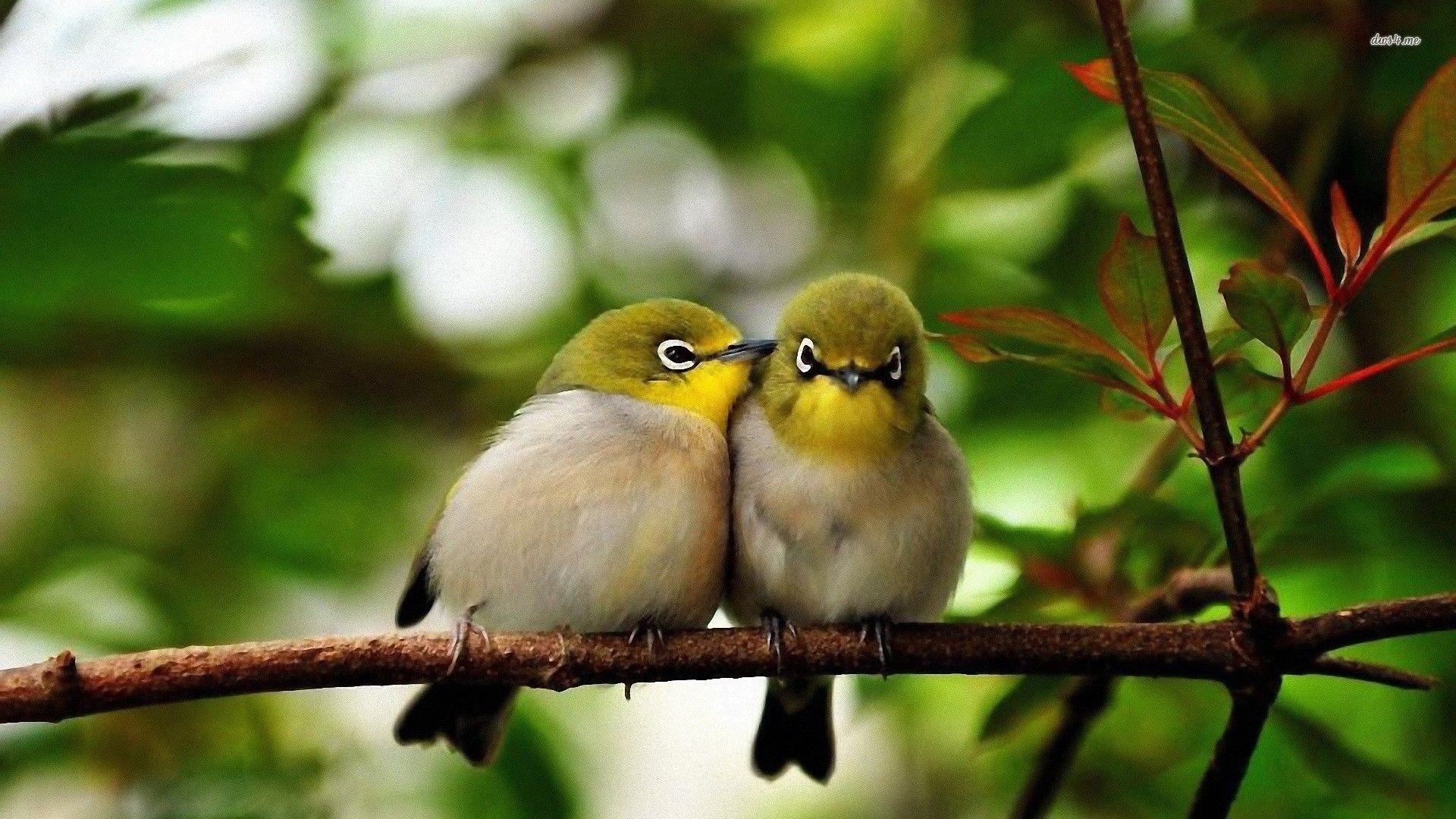 Cute Bird Wallpaper 1080p Nature Birds Beautiful Birds Birds Wallpaper Hd
