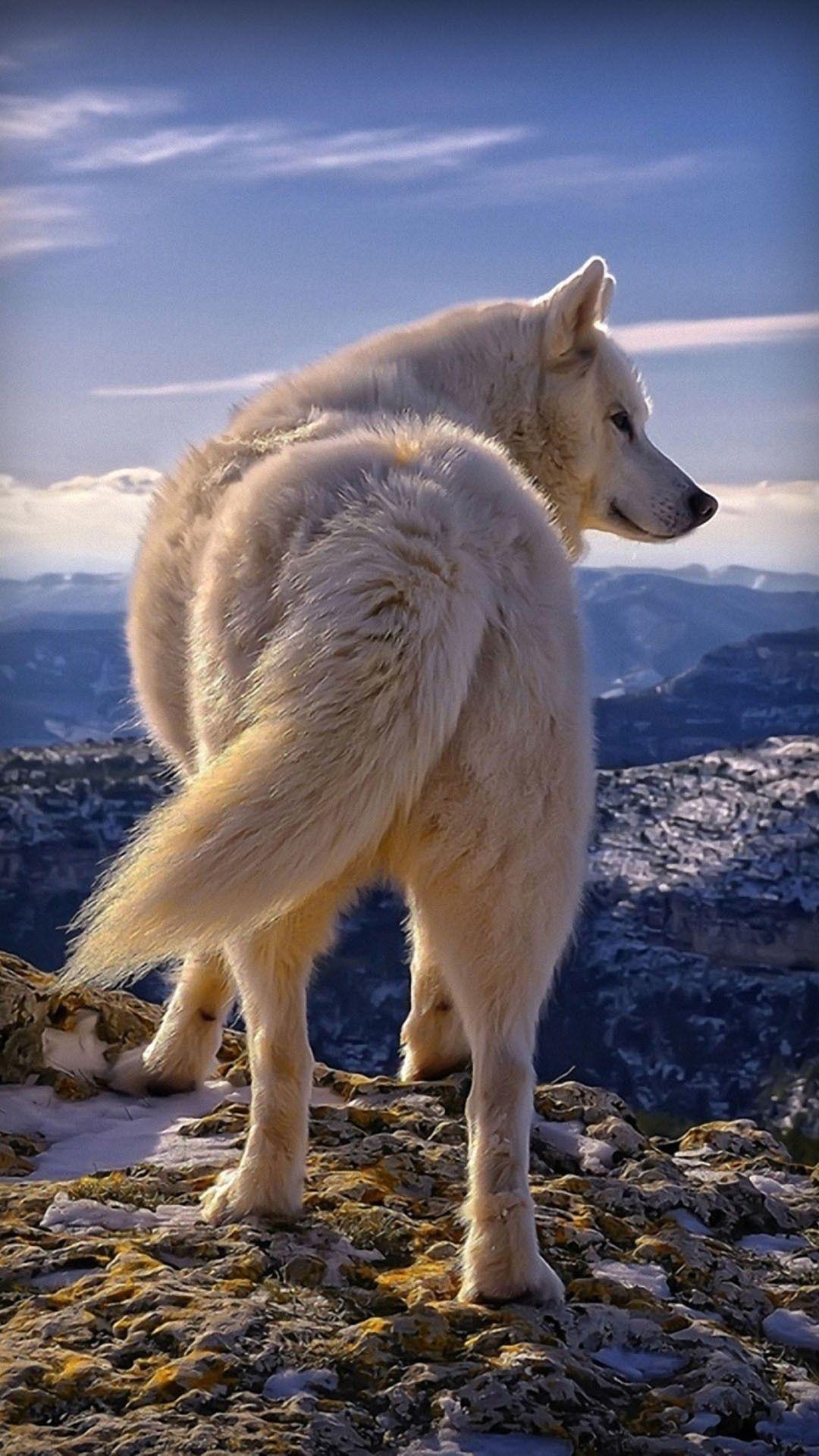 Pin by Fireway on Wolf ♡ White wolf dog, White husky, Dogs