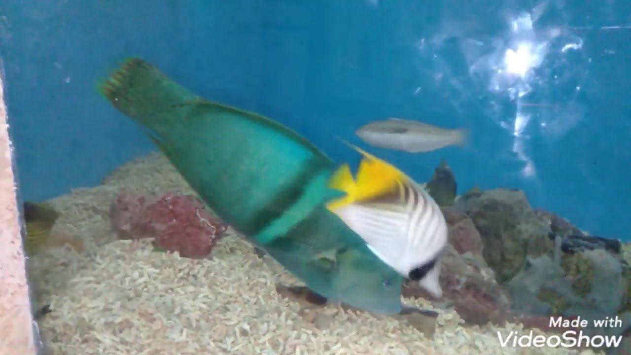 جولتي داخل متحف الاحياء المائية بالاسكندريه Fish Pet Fish Pets