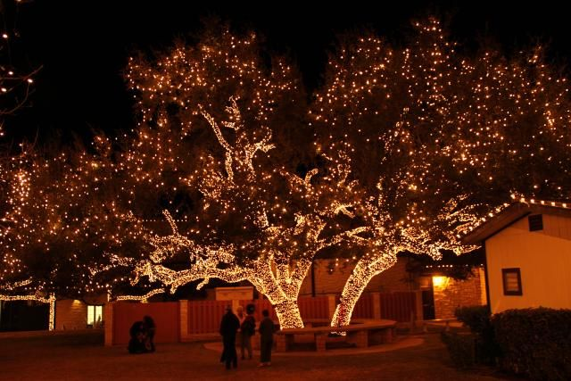 Use net lights to help with decorating the outdoors they easily use net lights to help with decorating the outdoors they easily wrap around trees drape over the bushes or hang over the roof workwithnaturefo