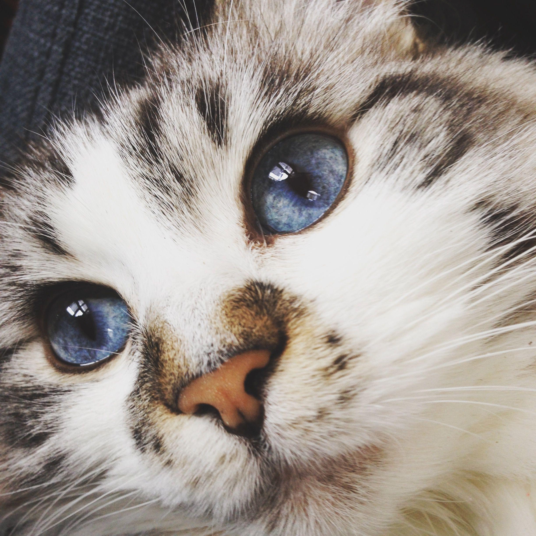 My Munchie! ) Cats, Animals