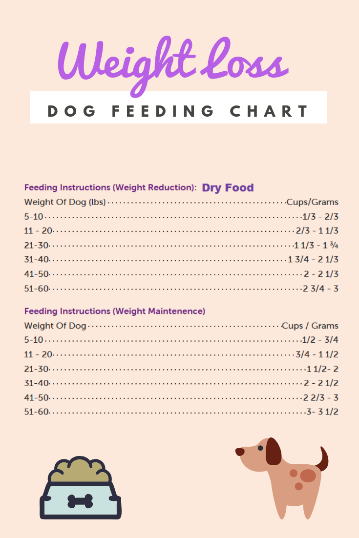 8c748dcbda6df38a82f5daff137d8f83 - How To Get My Overweight Dog To Lose Weight