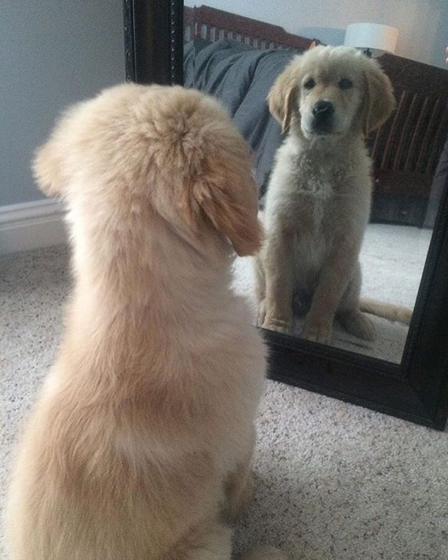 Mirror Mirror On The Wall Who S The Cutest Puppy Of Them All