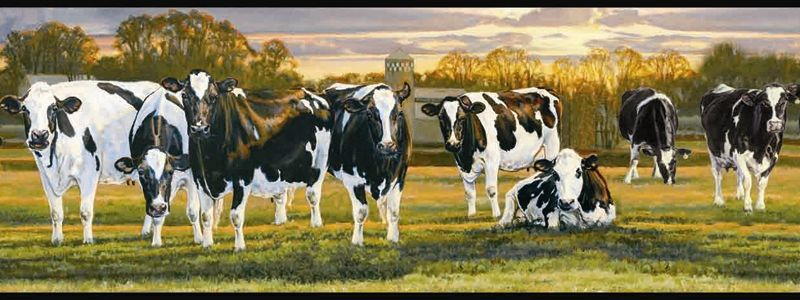 Country Dairy Cow Wallpaper Border, FFR65382B Farm Black And White Farm  Kitchen Decor, Kitchen