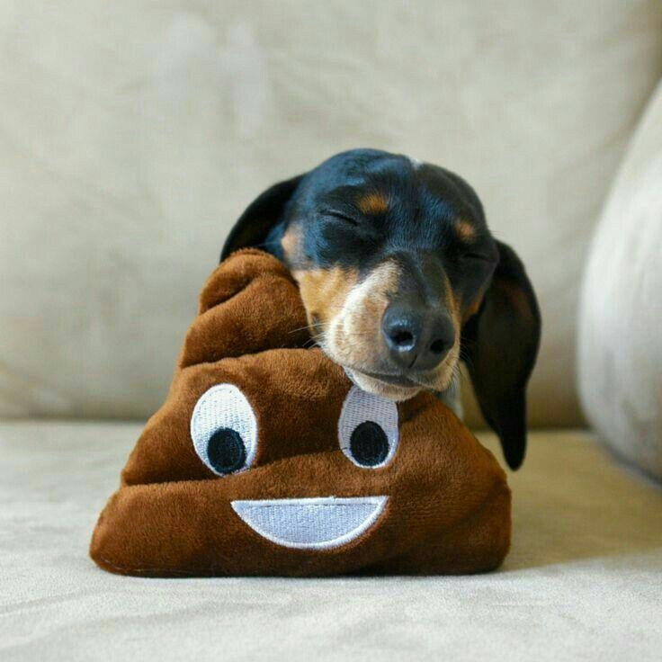 Pin By Dawn Kreiger On Dachs Lll Weenie Dogs Wiener Dog Weiner Dog