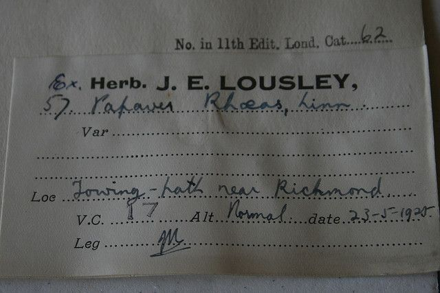 SLBI herbarium specimen label: Papaver rhoeas | Pinterest