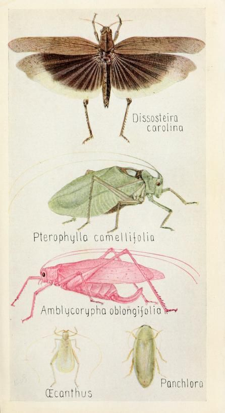 Field book of insects, - Biodiversity Heritage Library