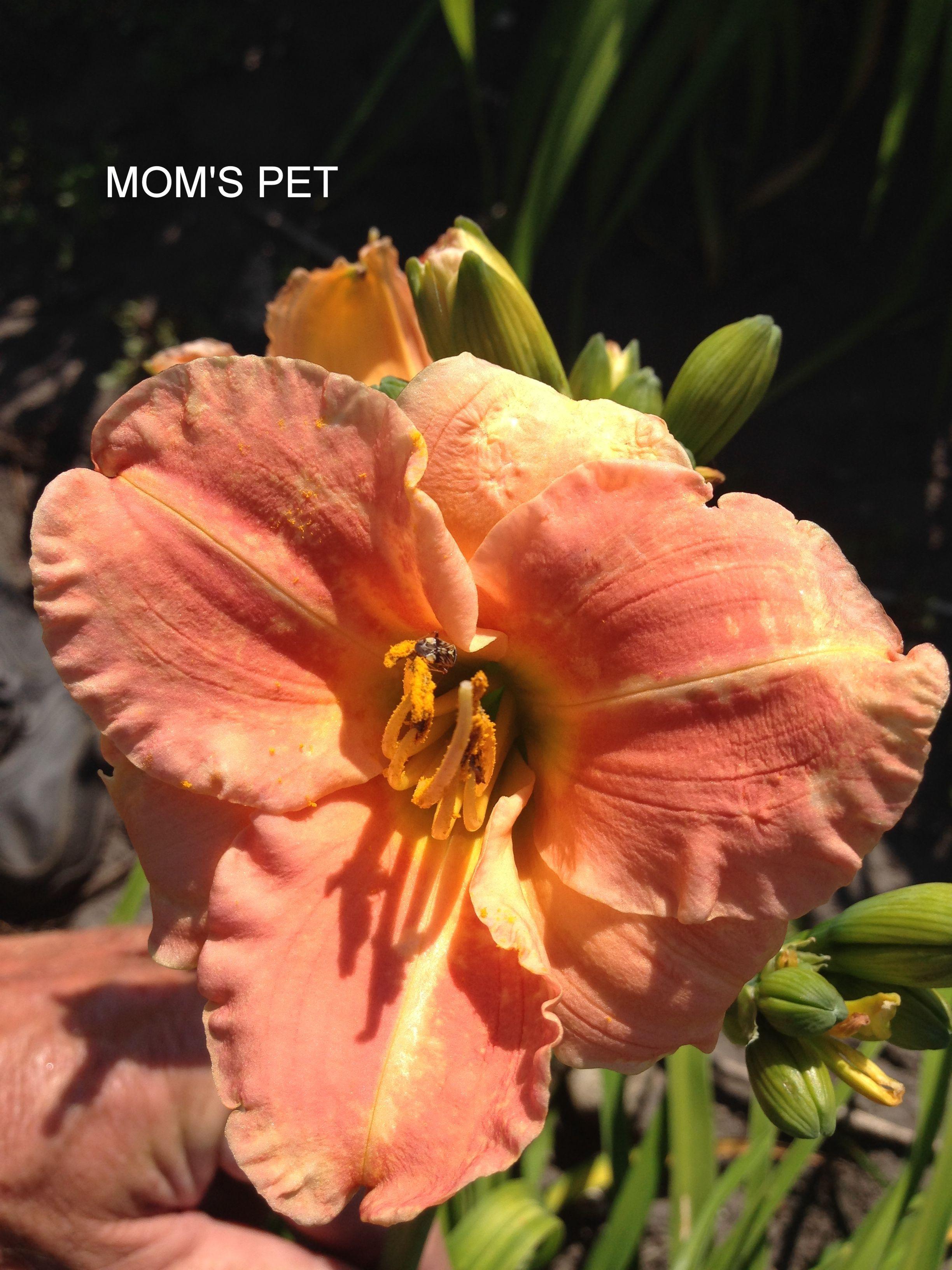 MOM'S PET
