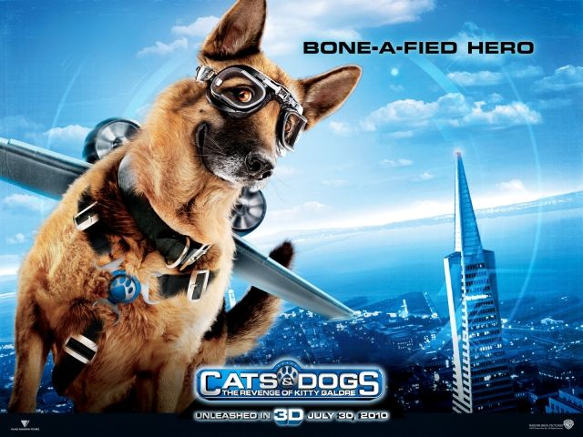 Cats Dogs Dog Movies Dog Cat Dog Films