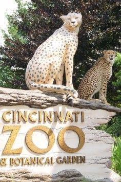 The Cincinnati Zoo & Botanical Garden is the second oldest zoo in the US and is ranked as one of the top 10 zoos in the country. Make sure you set some time aside for a visit! #botanicgarden