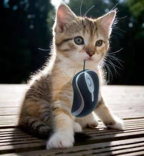 Cute Cat having computer mouse in mouth ;) | Grappige dieren ...