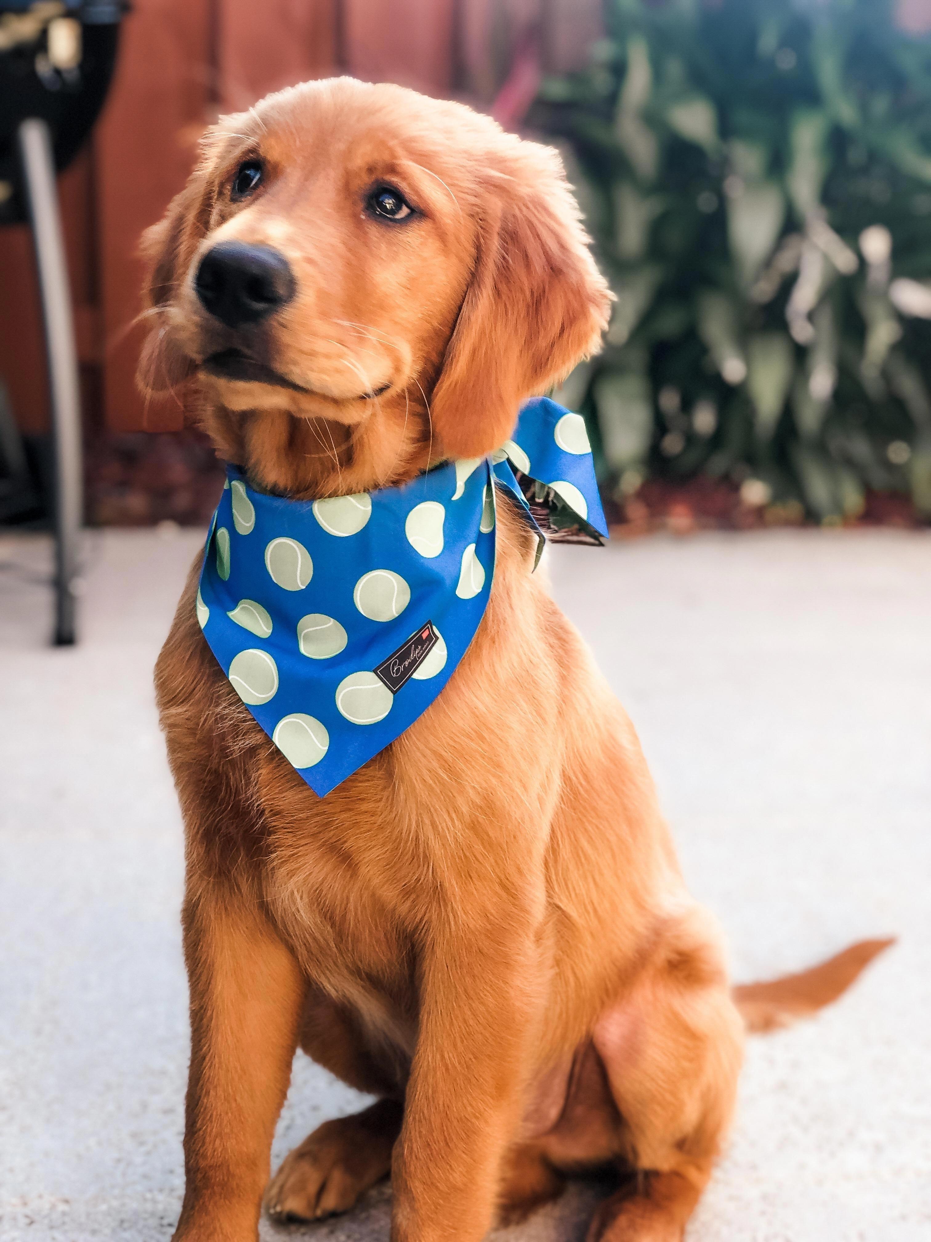 My Best Friend Is 5 Months Old Odintheredgolden Goldenretriever Pugs Cute Dogs Golden Retriever Super Cute Animals