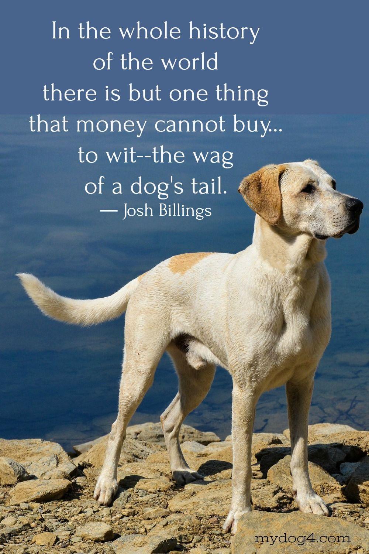 Dog Quotes Dog Quotes Dog Quotes Love Best Dog Quotes