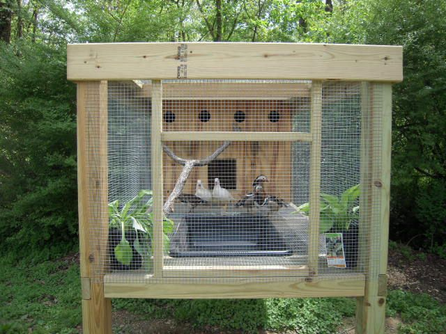 Gardening for How to build a duck pen