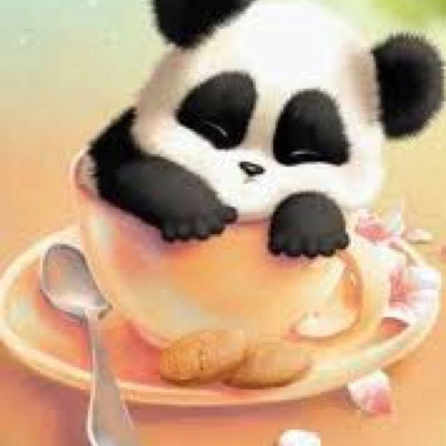 Panda in cup