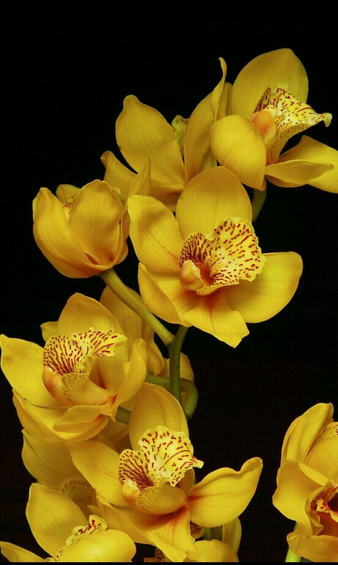 Pin von Teoflo Teodoriu auf orchidee | Pinterest