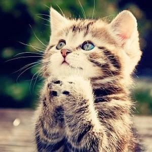Suara Anak Kucing Lucu Untuk Nada Dering Ponsel Kucing