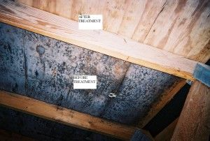 Mold Removal Mold Remediation In New York Vermont Bathroom Vent Mold Remediation Molding