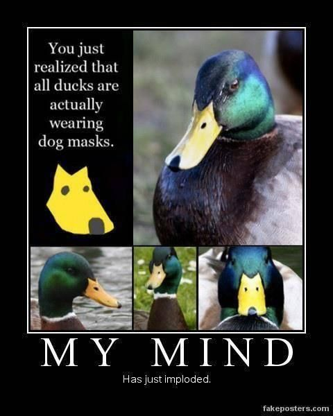 You've just realised all ducks are wearing dog masks...