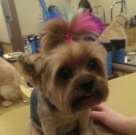 Feathers add a splash of color to this adorable pup!