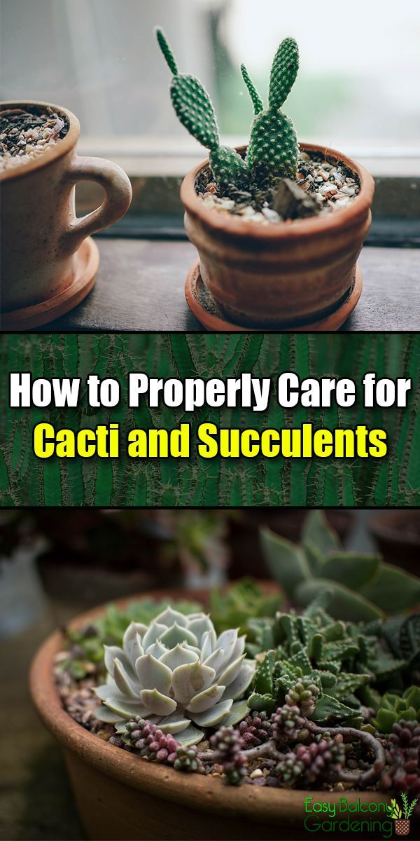 Photo of How to Properly Care for Cacti and Succulents