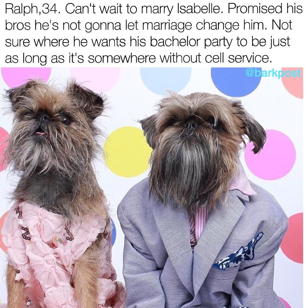 Pin by will waters on animals pinterest funny animals funny and