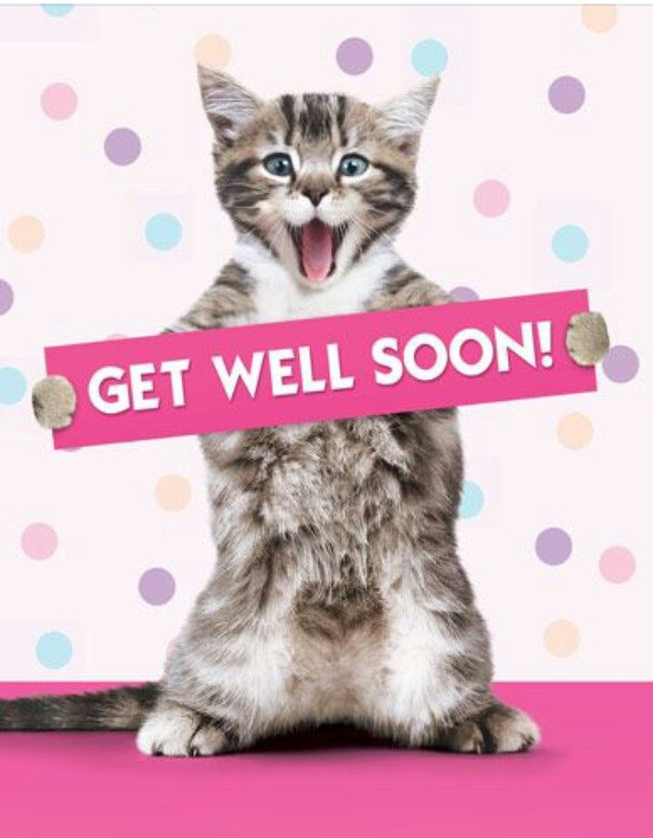 Image result for get well soon tabby cat