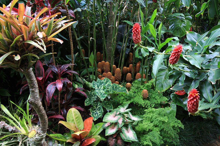 Tropical Garden Ideas Brisbane dennis hundscheidt tropical gardens - google search | tropical