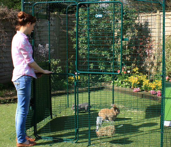 Outdoor Rabbit Run Outdoor Rabbit Run Rabbit Enclosure Rabbit Run