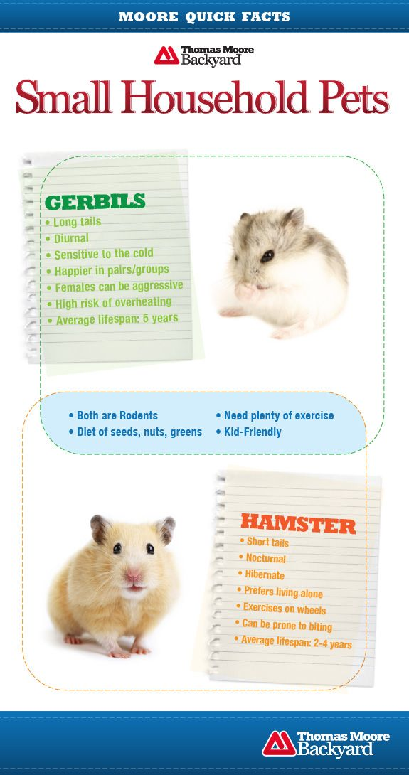 What Is The Difference Between A Hamster And A Gerbil Find Out