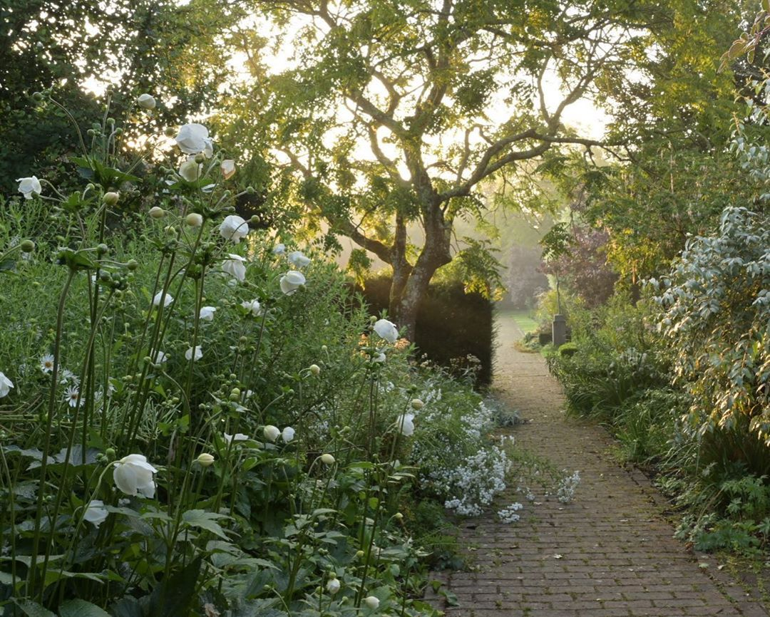 Borde Hill Garden On Instagram Romantic Scenery In The White Garden Gardens Whitegarden Japaneseanemones Ro White Gardens Garden On A Hill Sussex Gardens