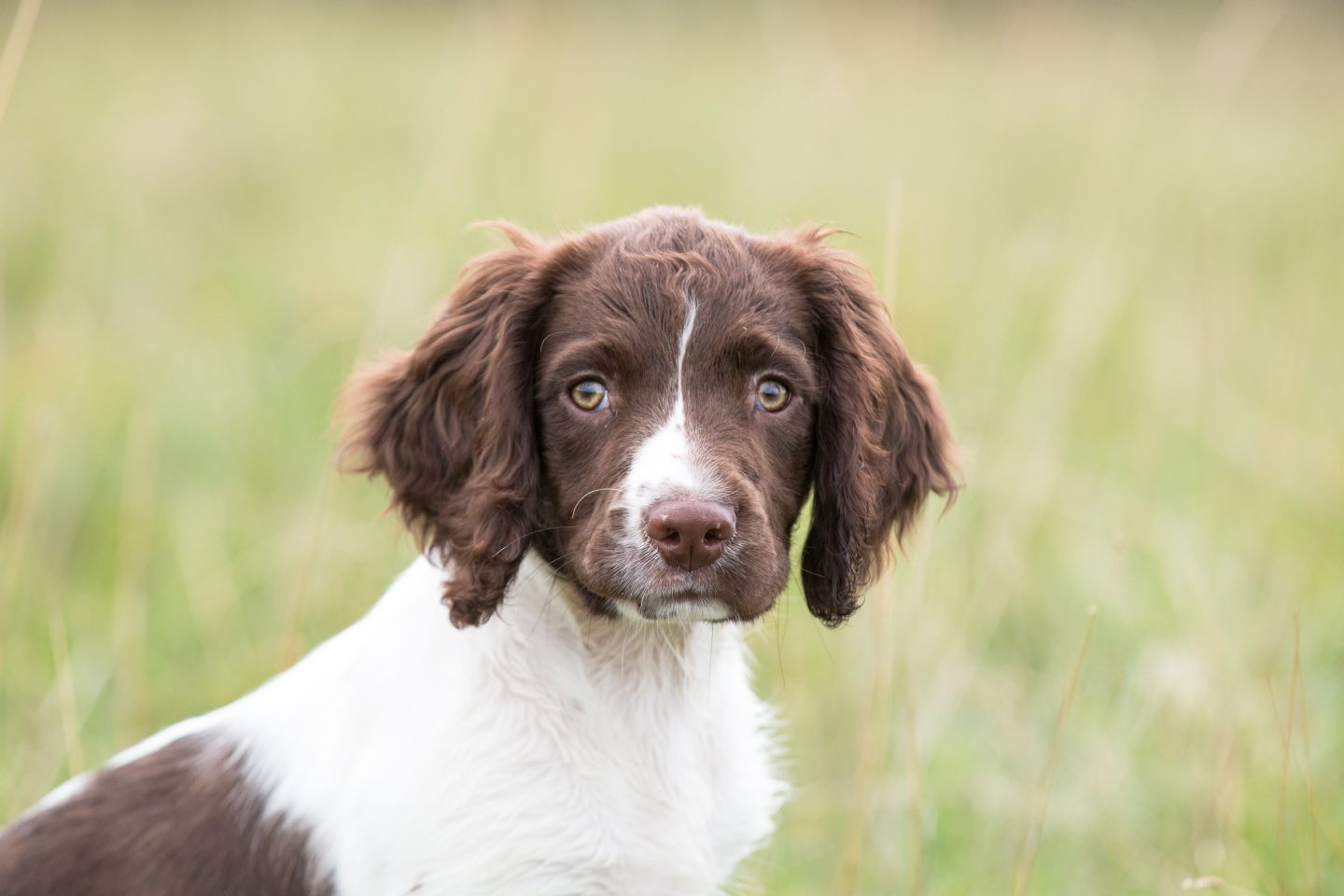 Can you raw feed a puppy with images puppies natural