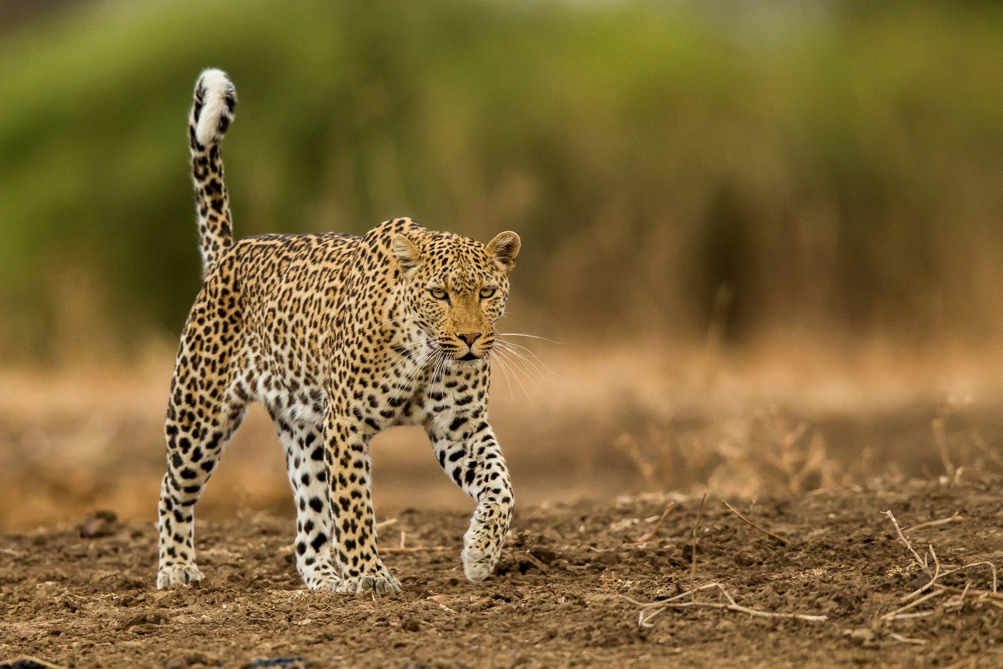Spots of Zambia! by Kanwar Deep Juneja on 500px