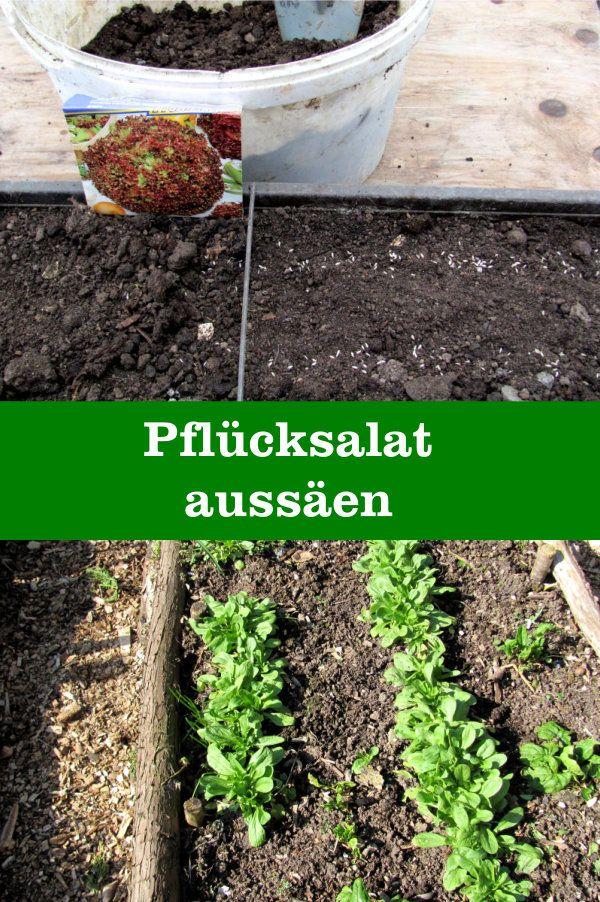 Pflucksalat Aussaen Gartenbob De Der Garten Ratgeber Salat Pflanzen Garten Pflanzen Und Garten