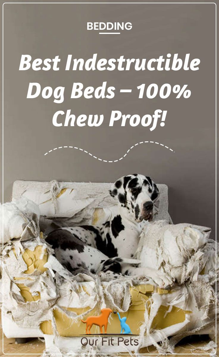Best Indestructible Dog Beds 100 Chew Proof (With