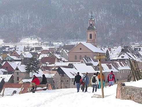 alsace- Riquewihr sous la neige - chemin de vignes du Schoenenbourg