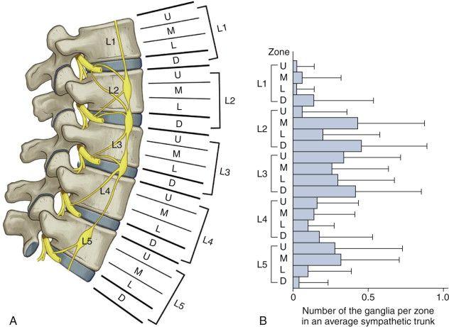 Abdominal Anatomy Medical Illustration Medivisuals Manual Guide