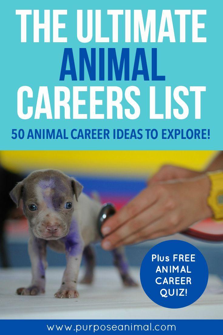 The Ultimate Animal Careers List 50 Animal Career Ideas To Explore Purpose Animal List Of Careers Animal Science Jobs With Animals