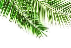 Bildergebnis für desktop wallpaper palmenblatt