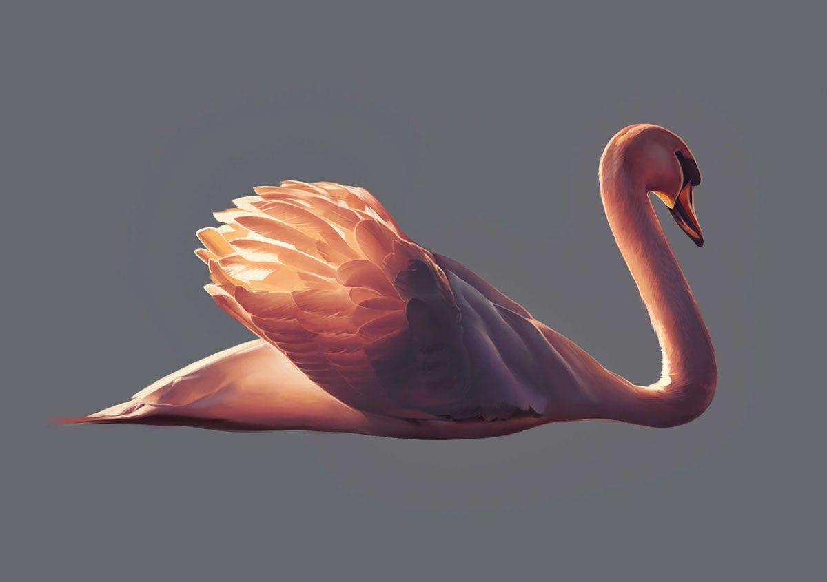 Swan On Behance