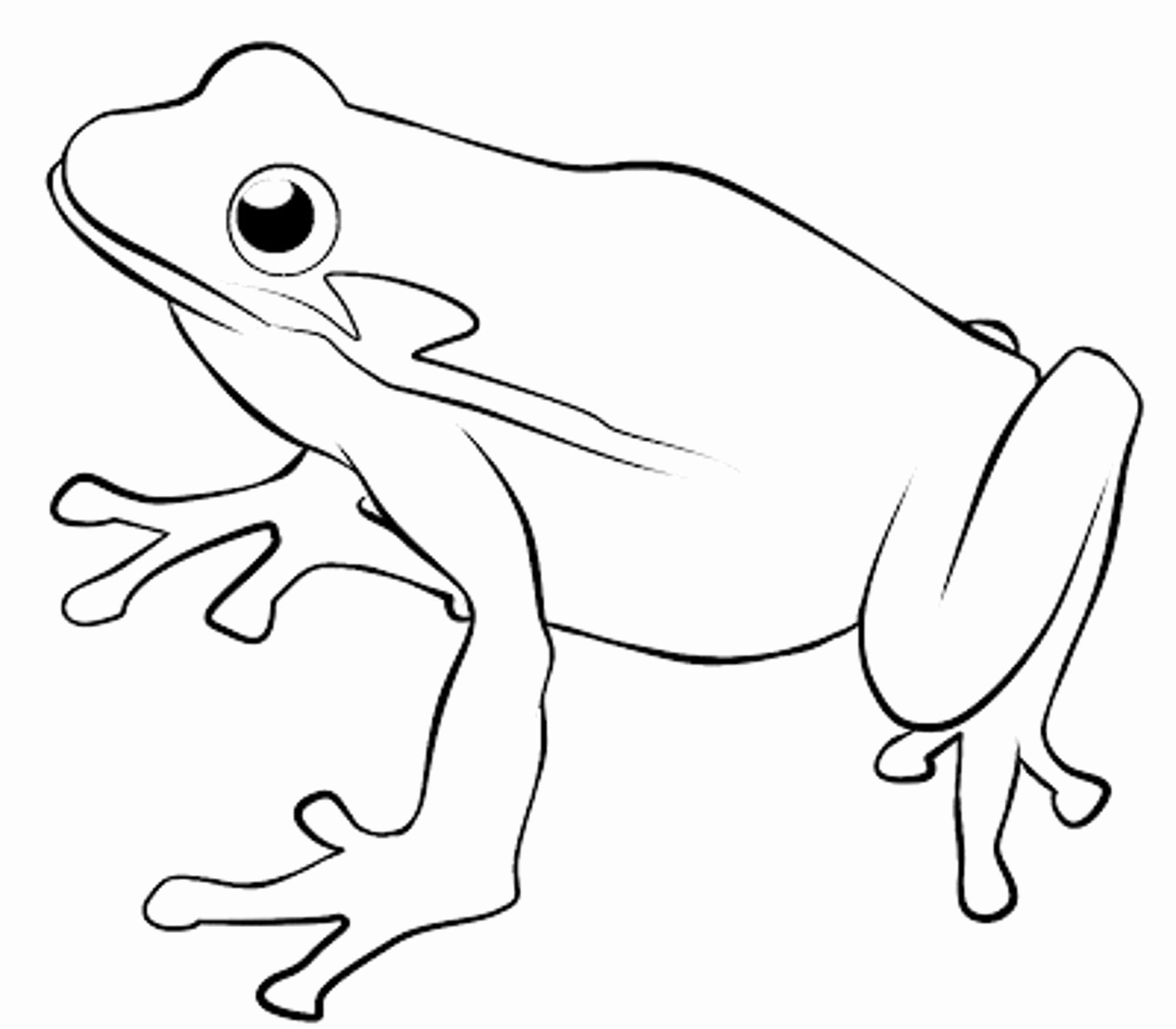 Tree Frog Coloring Page Frog Coloring Pages Snake Coloring