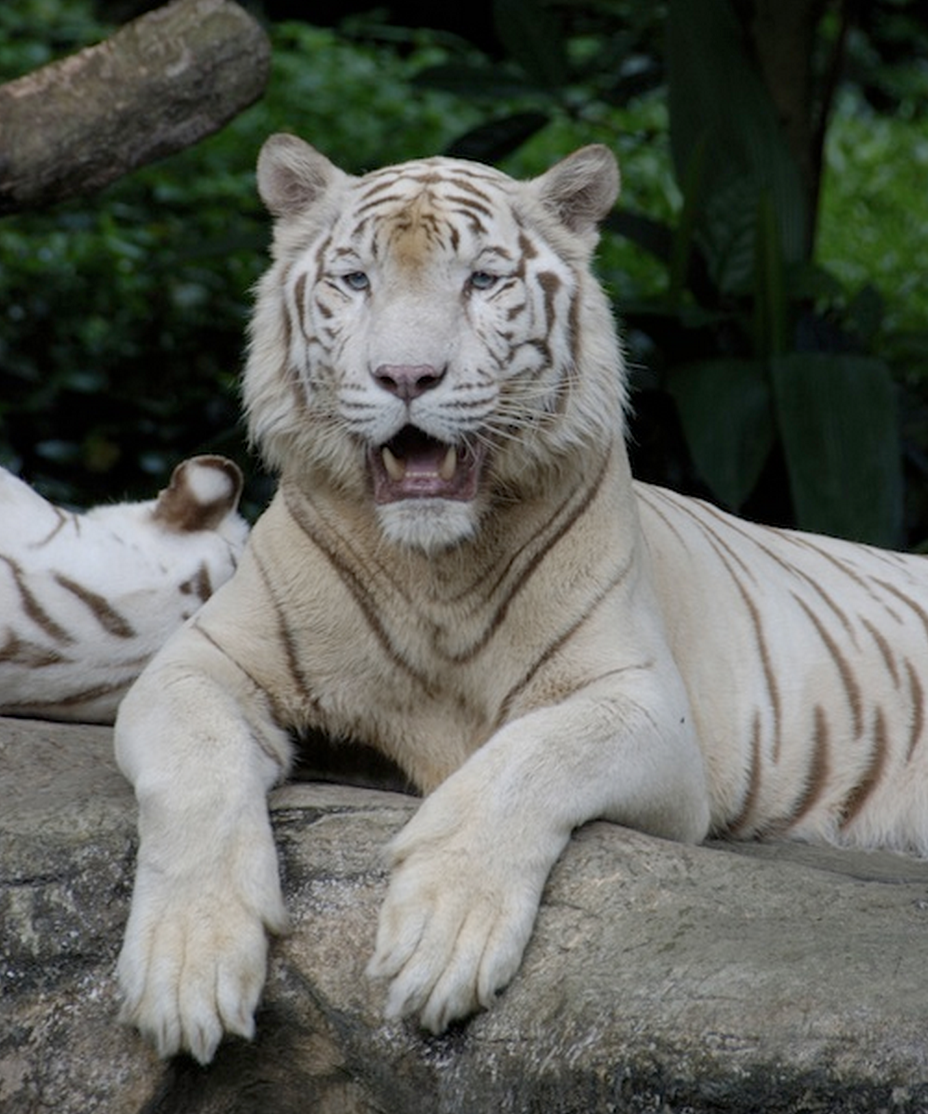 10 Best Zoos in the World Animals united, Pretty cats