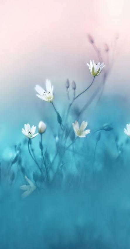 Trendy flowers white garden inspiration 59 ideas #garden #flowers