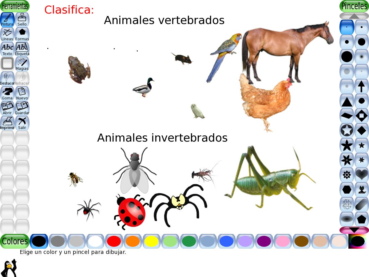 Animales Vertebrados E Invertebrados Imagui Puppies Art Pincode